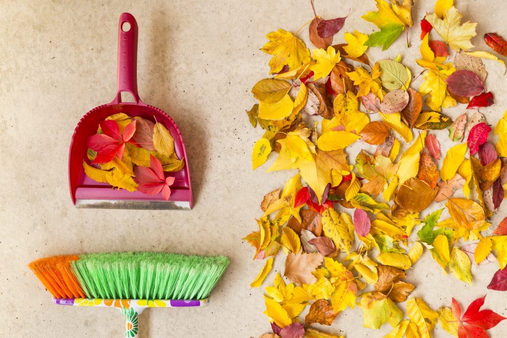 őszi nagytakarítás