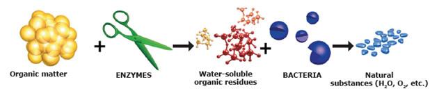 Probiotikus tisztítószerek hatásmechanizmusa